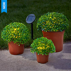 Set of 3 Solar Topiary Plants in Pots - Opened Item