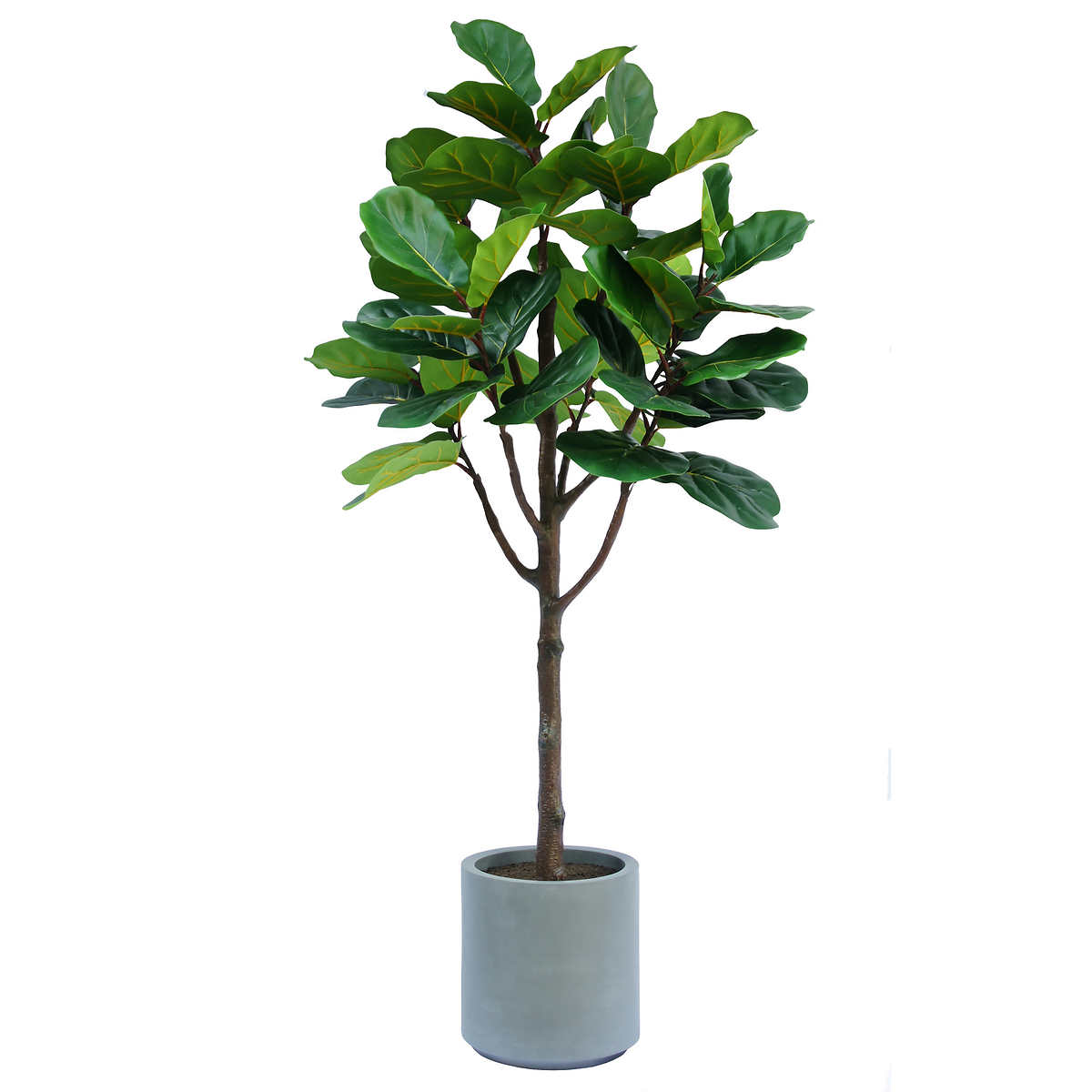 1 9 M 6 5 Ft Fiddle Leaf Artificial Fig Tree In White Planter