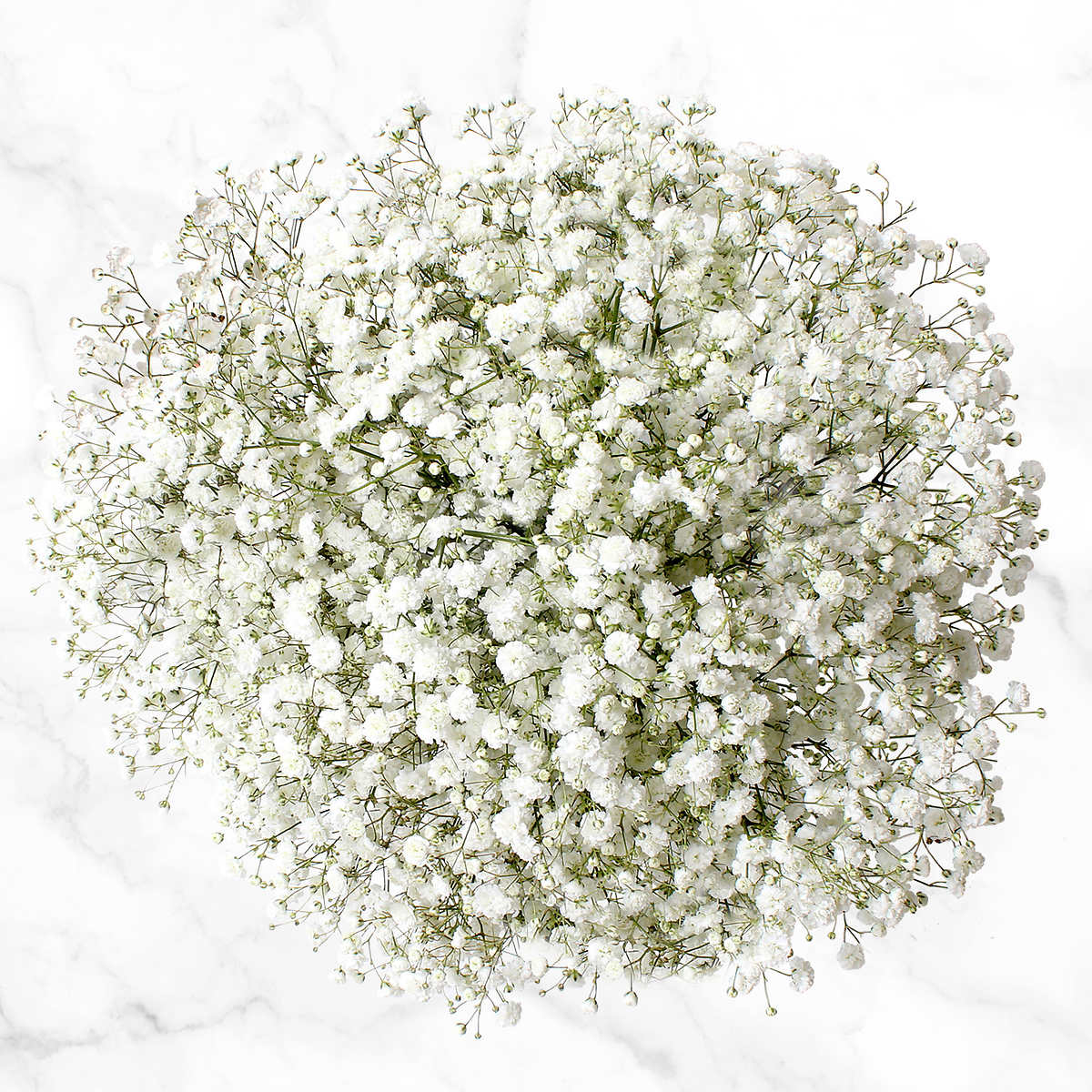 100 Stem Baby S Breath