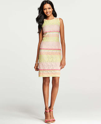 Petite Lace Horizon Dress