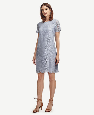 Image of Lace Shift Dress