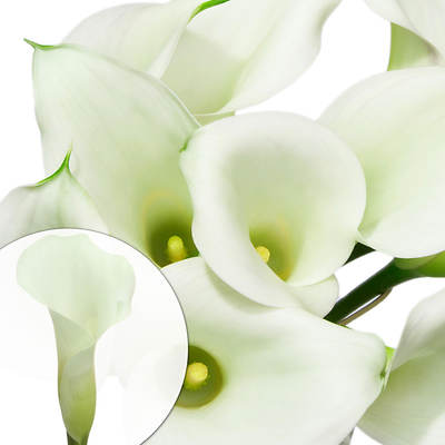 Mini Calla Lilies, 100 Stems - White
