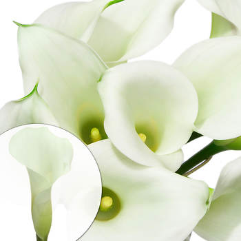 Mini Calla Lilies, 100 ct. - White