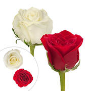Rainforest Alliance Certified Roses, 125 Stems - Red/White