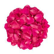 5,000 Rose Petals - Hot Pink