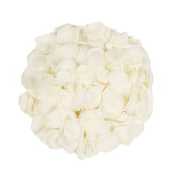 5,000 Rose Petals - White