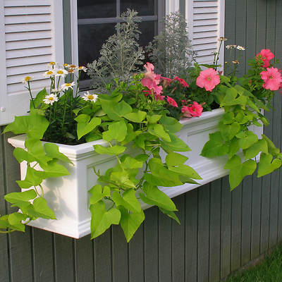 Mayne Fairview 4' Window Box - White