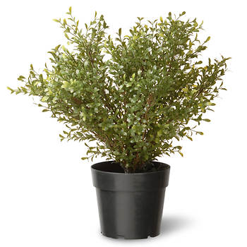 "National Tree Company 24"" Artificial Argentea Plant"