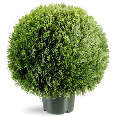 "National Tree Company 20"" Artificial Cedar Pine Topiary"