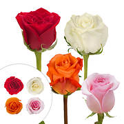 Rainforest Alliance Certified Roses, 125 Stems - Red/Pink/White/Grower