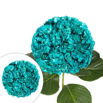 Hand-Painted Hydrangeas, 26 Stems - Aqua