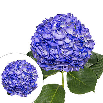 Hand-Painted Hydrangeas, 26 Stems - Blueberry