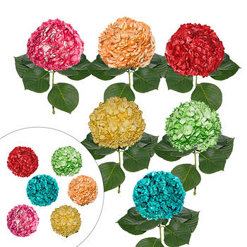 Hand-Painted Hydrangeas, 26 Stems - Fiesta Assorted