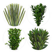 Flax, Viburnum, Cocculus and Ruscus, 175 Stems - Assorted