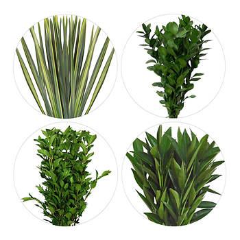 Flax/Viburnum/Cocculus/Pittosporum/Ruscus, 175 Stems - Assorted