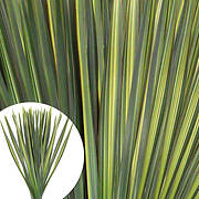 Flax Floral Filler, 200 Stems - Variegated