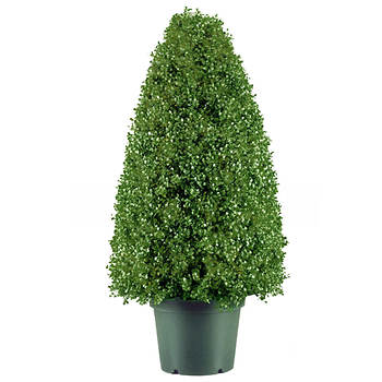 "30"" Indoor/Outdoor Artificial Boxwood Tree"