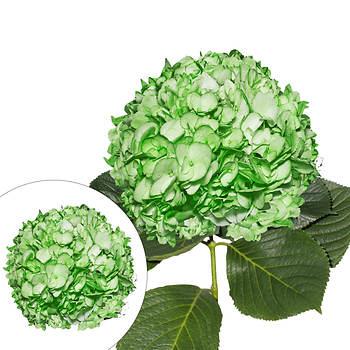 Hand-Painted Hydrangeas, 26 Stems - Green