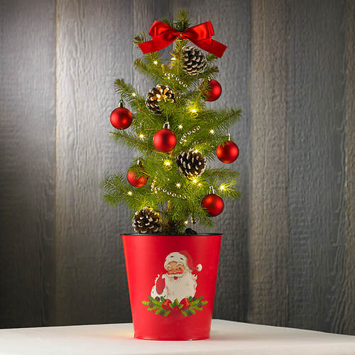 Live Tabletop Christmas Tree - Out of Stock | Figi's