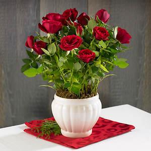Mini Ceramic Rose Bush