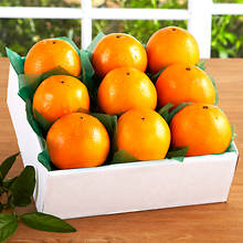 Florida Citrus - 9 count Oranges