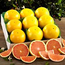 Florida Citrus - 9Count Grapefruit