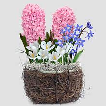 Fairy Bulb Garden