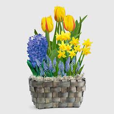 Spring Glory Bulb Basket