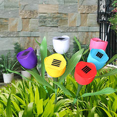 Kocaso 6-Piece Tulip Solar Lights