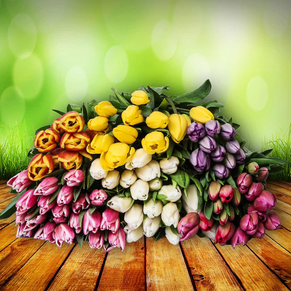 Premium canadian tulips 100 premium canadian tulips izmirmasajfo Images