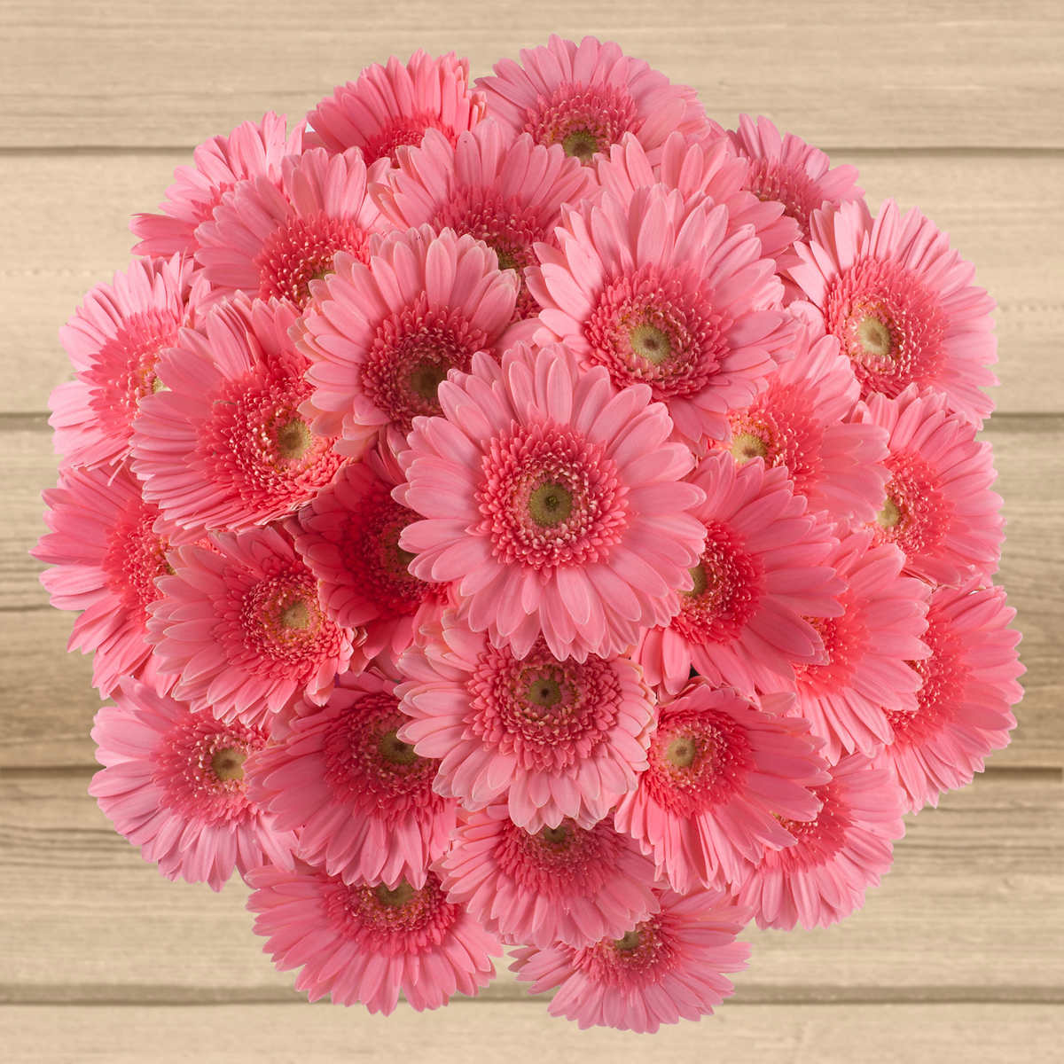 Solid Color Gerbera Daisy - 80 Stems