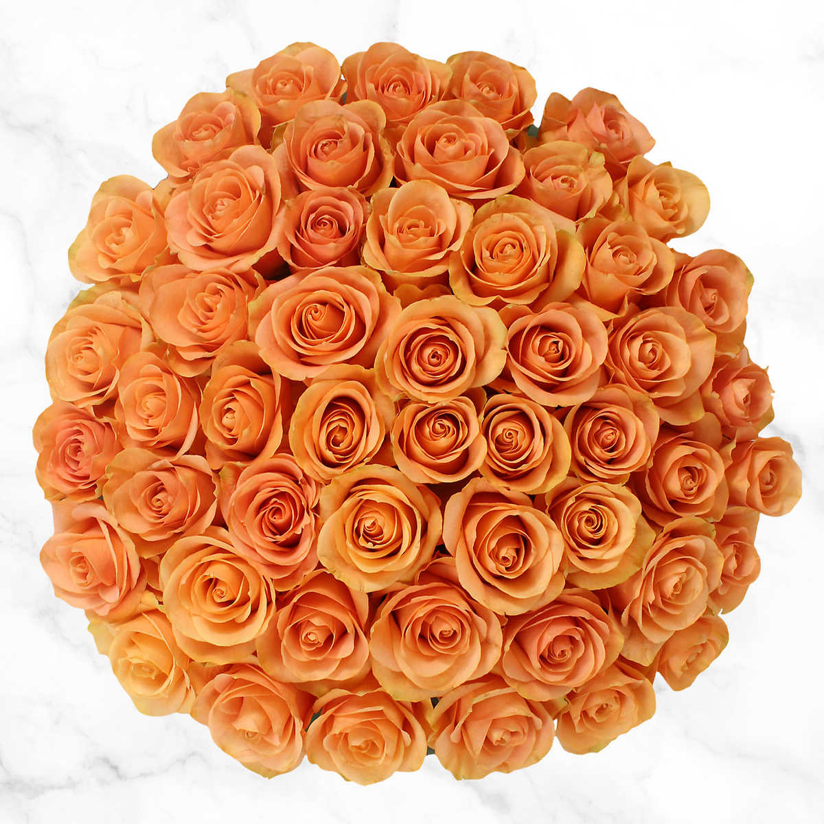 Home bulk roses peach roses - 50 Stem Peach Roses Item 1183432 Click To Zoom