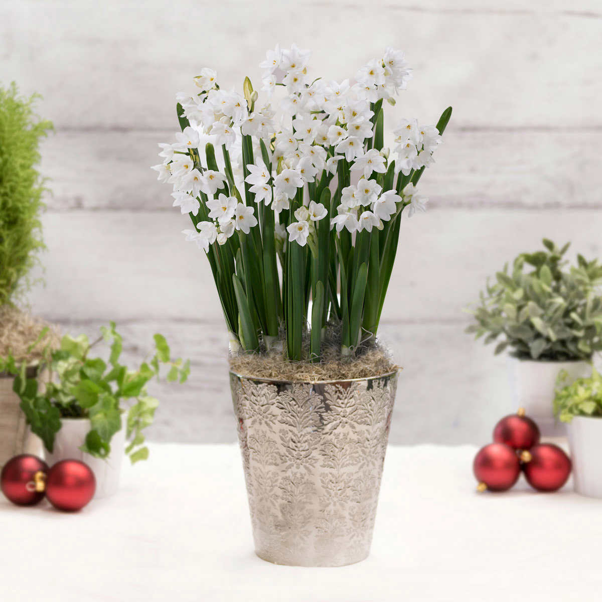 Paperwhites With Silver Ceramic