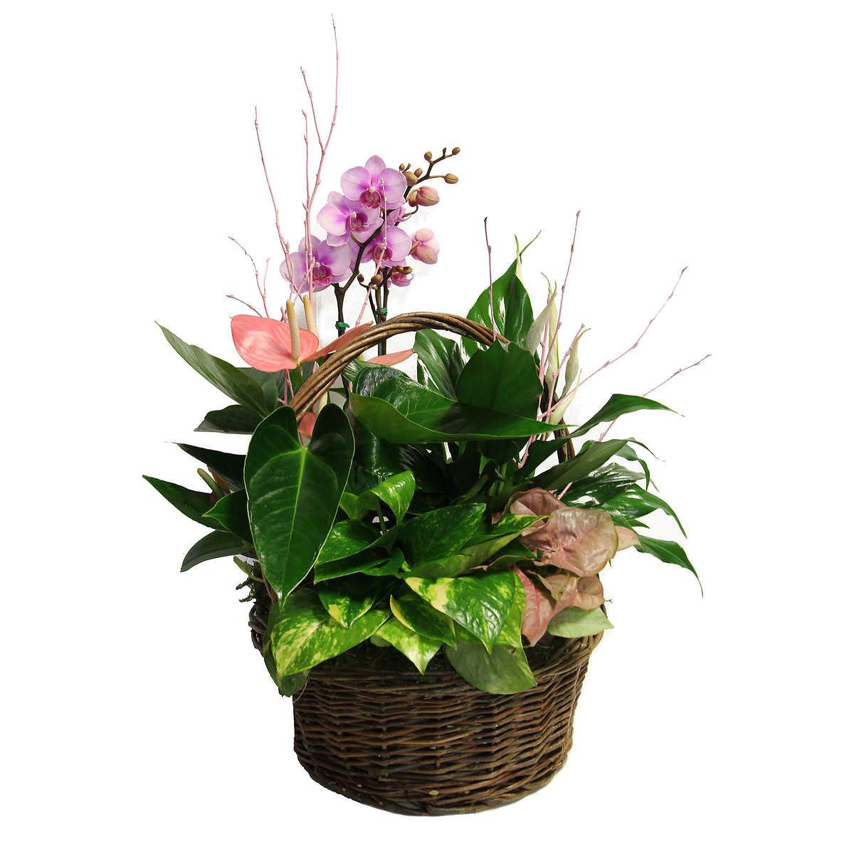 Lovely Purplepink Orchids Phalaenopsis Anthurium Flower Floral
