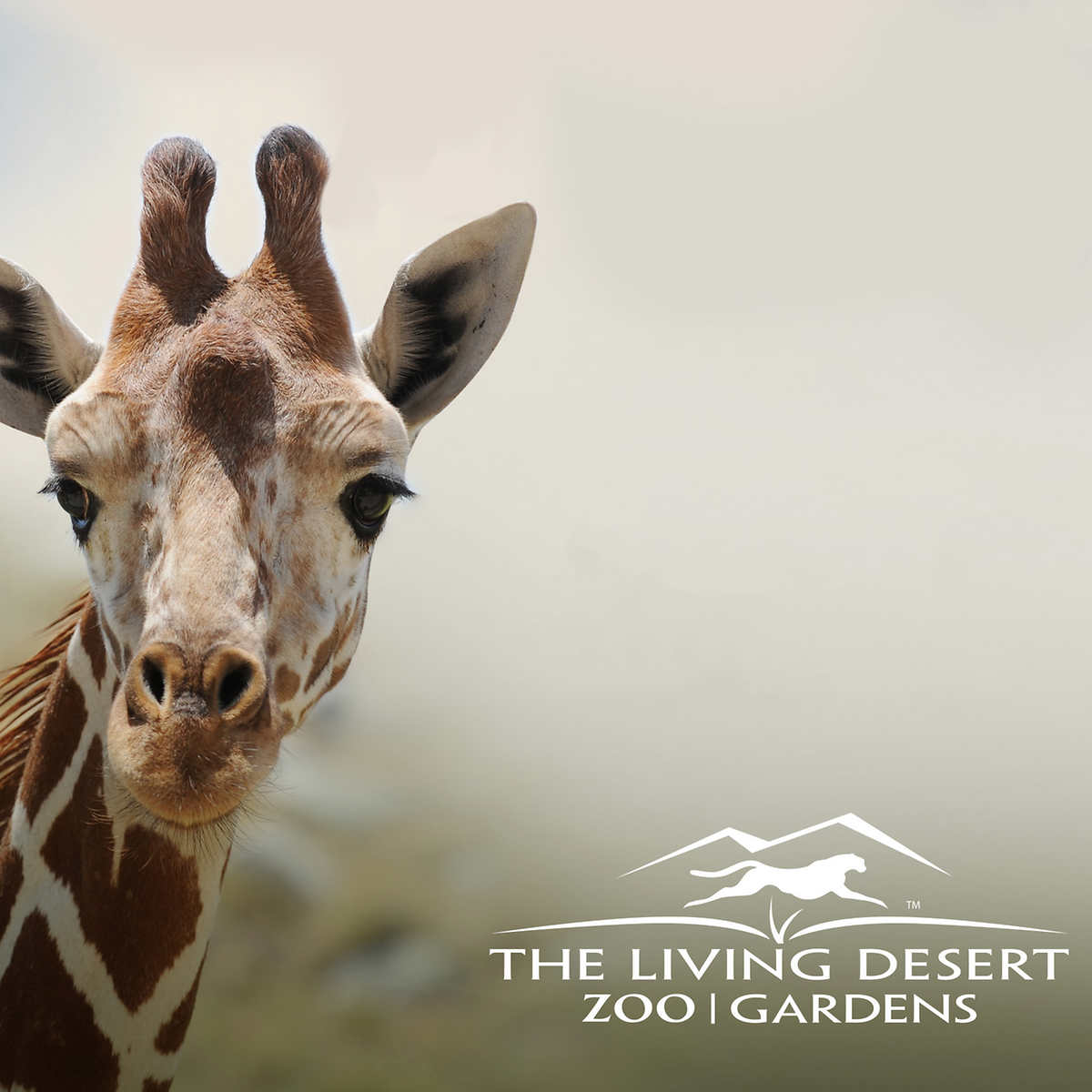 6d7413c3d9843 The Living Desert Zoo & Gardens 2 Admission eTickets