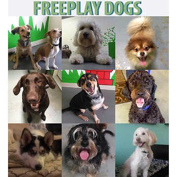 Freeplay Dogs