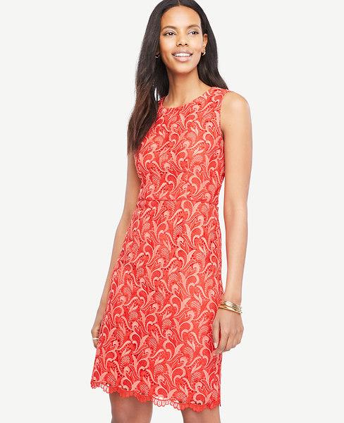 Ann Taylor Tall Two Tone Lace Sheath Dress