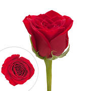 Rainforest Alliance Certified Roses, 50 Stems - Red