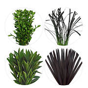 Flax, Viburnum, Cocculus and Lily Grass, 200 Stems - Assorted
